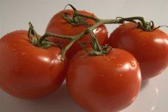Salsa tomatoes 2