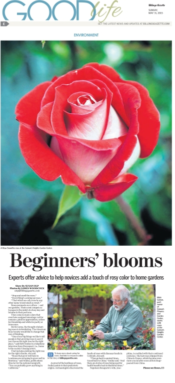 BG150531E01 Roses